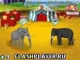 Игра Цирковые слоны - играть бесплатно онлайн