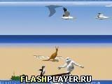 Игра Yetisports 4 – Альбатросы везде - играть бесплатно онлайн