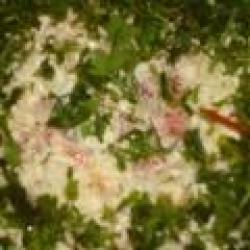 Кулинарный рецепт Кальмары с рисом с фото